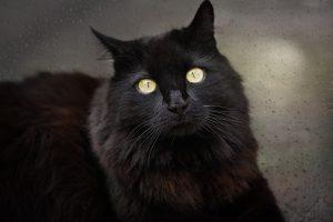 cat-837520_1920